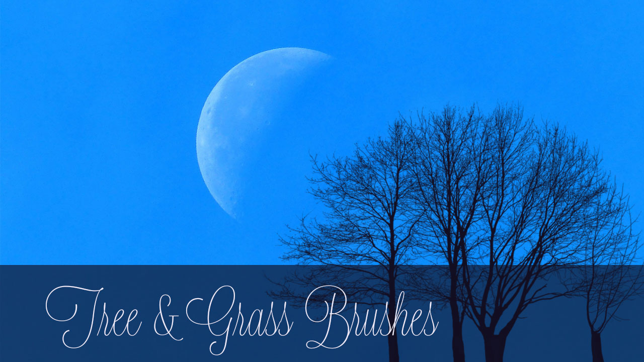 Our example image here shows the tree brush used on a photo of a large half moon